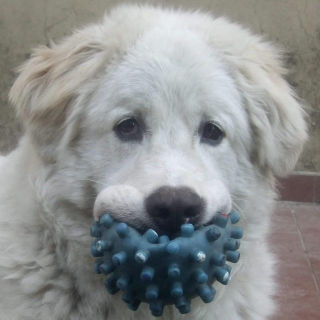 Brando cucciolo ❤️